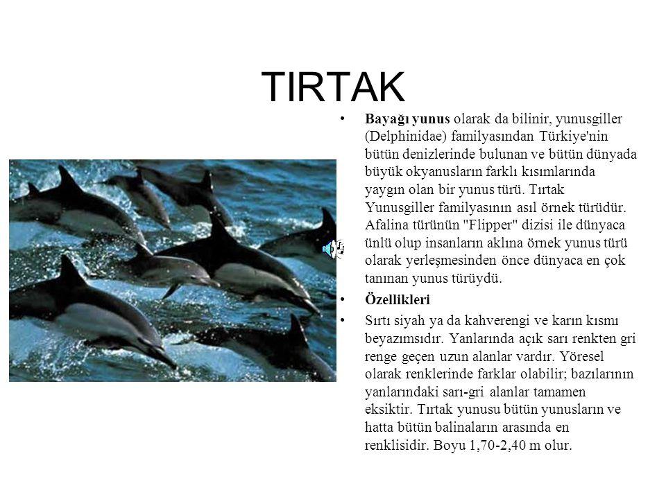 TIRTAK Bayağı yunus olarak da bilinir, yunusgiller (Delphinidae) familyasından Türkiye'nin bütün denizlerinde bulunan ve bütün dünyada büyük okyanusla