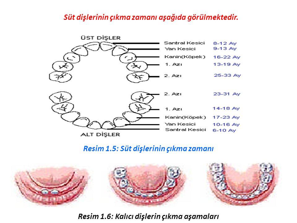 Süt dişlerini tamamlayan çocuk yedi yaşına geldiğinde süt dişleri çıkış sırasına göre düşmeye başlar ve yerini kalıcı dişlere bırakır.