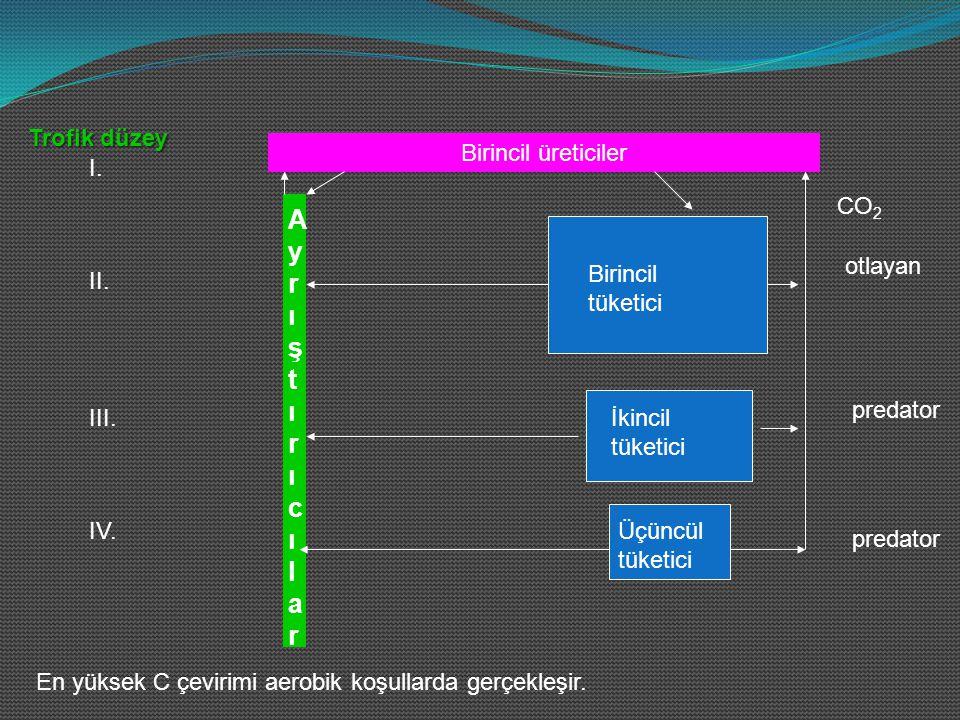 Birincil üreticiler AyrıştırıcılarAyrıştırıcılar CO 2 otlayan predator Trofik düzey I. II. III. IV. En yüksek C çevirimi aerobik koşullarda gerçekleşi