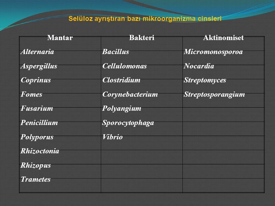 MantarBakteriAktinomiset AlternariaBacillusMicromonosporoa AspergillusCellulomonasNocardia CoprinusClostridiumStreptomyces FomesCorynebacteriumStrepto