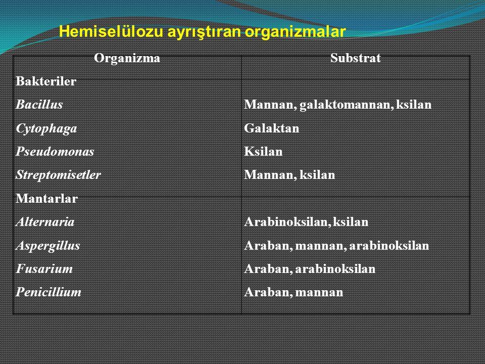 OrganizmaSubstrat Bakteriler BacillusMannan, galaktomannan, ksilan CytophagaGalaktan PseudomonasKsilan StreptomisetlerMannan, ksilan Mantarlar Alterna