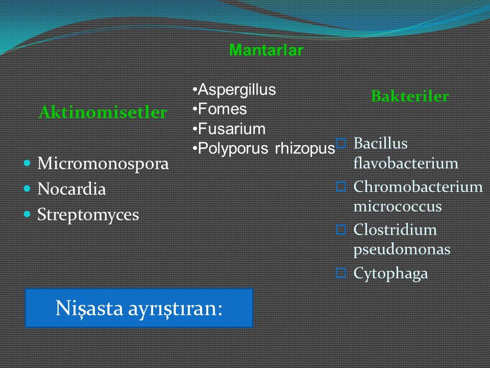 Aktinomisetler Micromonospora Nocardia Streptomyces Mantarlar Aspergillus Fomes Fusarium Polyporus rhizopus Bakteriler  Bacillus flavobacterium  Chr
