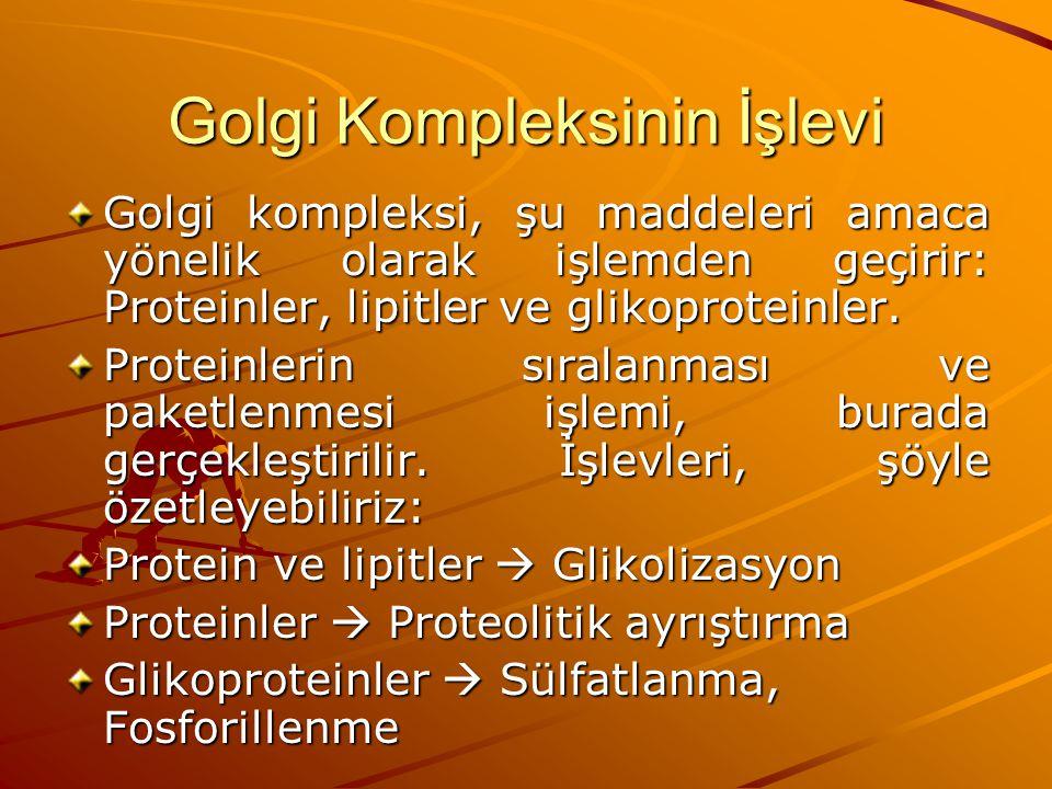 Golgi Kompleksinin İşlevi Golgi kompleksi, şu maddeleri amaca yönelik olarak işlemden geçirir: Proteinler, lipitler ve glikoproteinler. Proteinlerin s