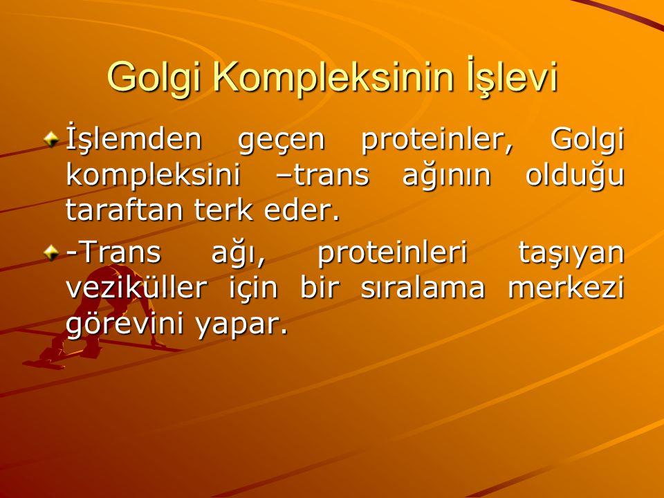 Golgi Kompleksinin İşlevi İşlemden geçen proteinler, Golgi kompleksini –trans ağının olduğu taraftan terk eder. -Trans ağı, proteinleri taşıyan vezikü