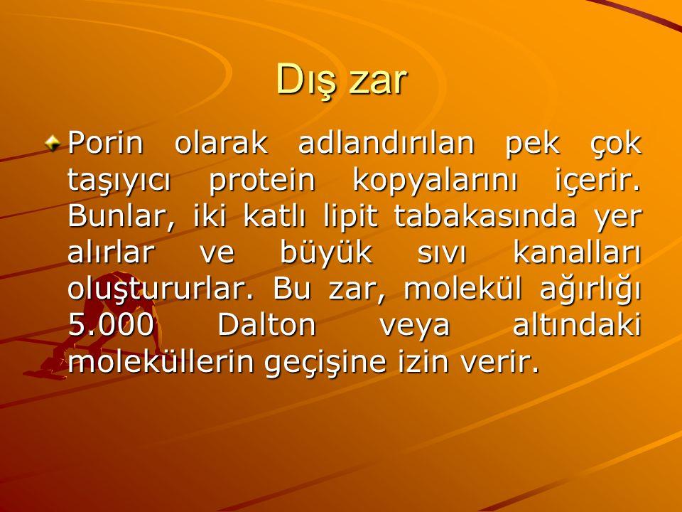Dış zar Porin olarak adlandırılan pek çok taşıyıcı protein kopyalarını içerir. Bunlar, iki katlı lipit tabakasında yer alırlar ve büyük sıvı kanalları