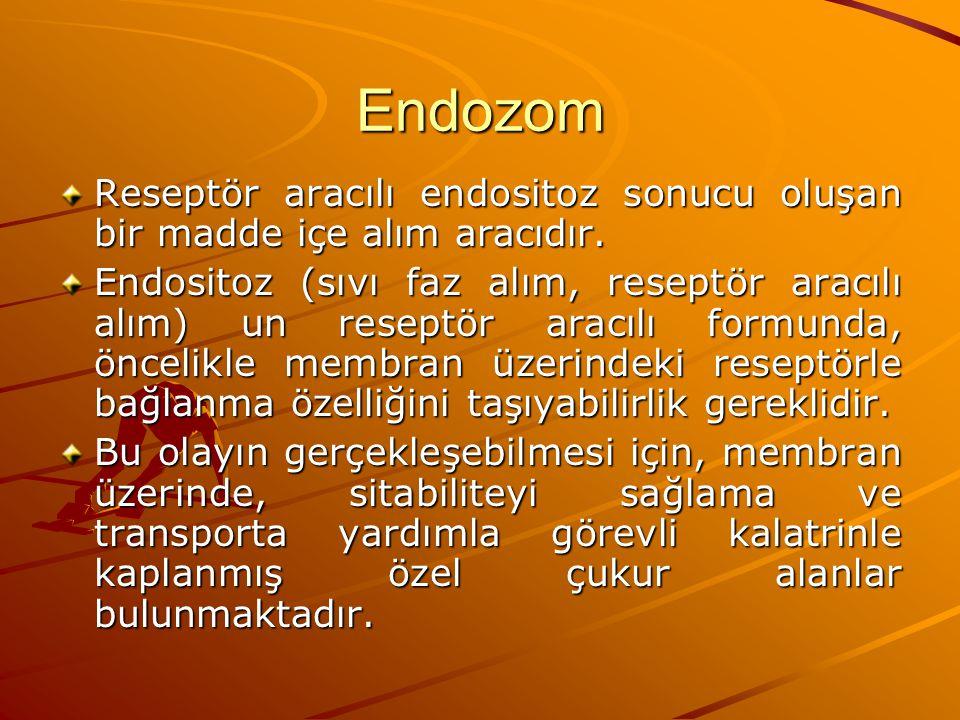 Endozom Reseptör aracılı endositoz sonucu oluşan bir madde içe alım aracıdır. Endositoz (sıvı faz alım, reseptör aracılı alım) un reseptör aracılı for