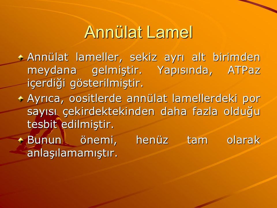 Annülat Lamel Annülat lameller, sekiz ayrı alt birimden meydana gelmiştir. Yapısında, ATPaz içerdiği gösterilmiştir. Ayrıca, oositlerde annülat lamell