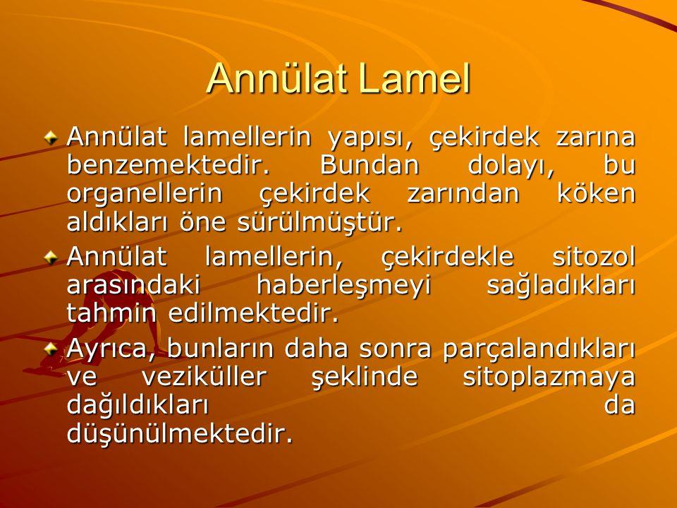 Annülat Lamel Annülat lamellerin yapısı, çekirdek zarına benzemektedir. Bundan dolayı, bu organellerin çekirdek zarından köken aldıkları öne sürülmüşt