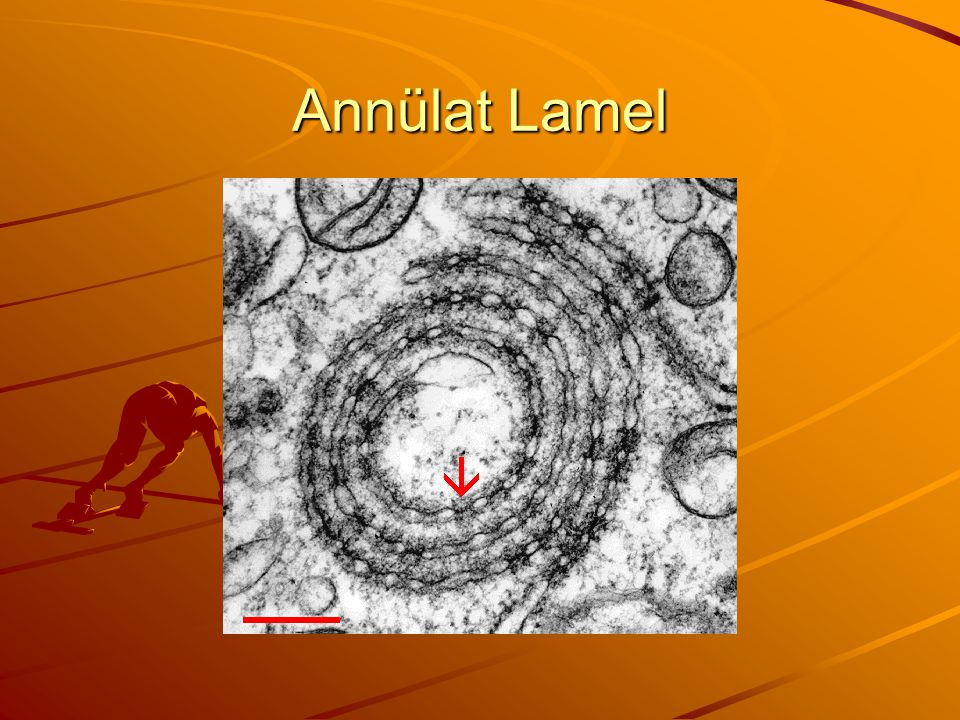 Annülat Lamel