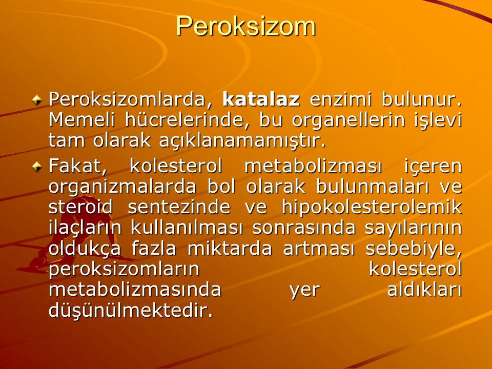 Peroksizom Peroksizomlarda, katalaz enzimi bulunur. Memeli hücrelerinde, bu organellerin işlevi tam olarak açıklanamamıştır. Fakat, kolesterol metabol
