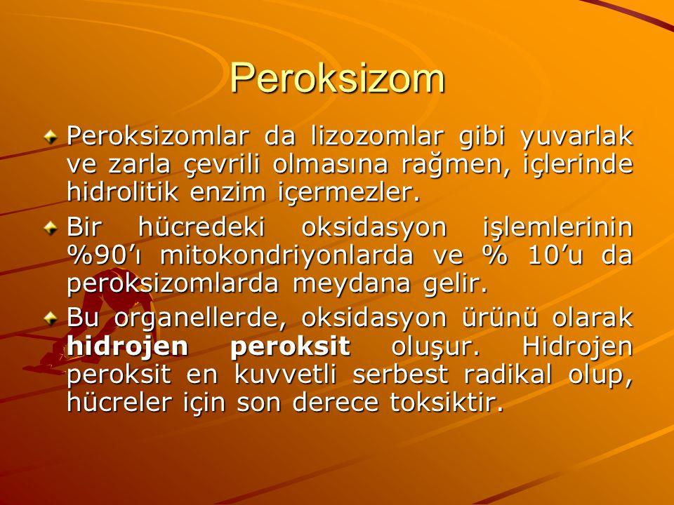 Peroksizom Peroksizomlar da lizozomlar gibi yuvarlak ve zarla çevrili olmasına rağmen, içlerinde hidrolitik enzim içermezler. Bir hücredeki oksidasyon