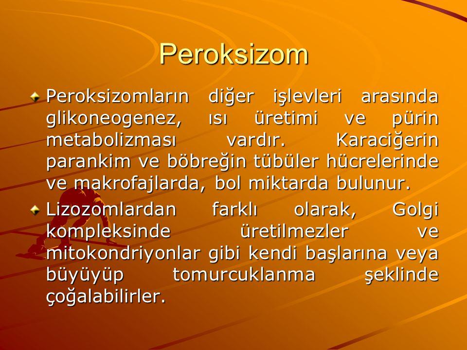 Peroksizom Peroksizomların diğer işlevleri arasında glikoneogenez, ısı üretimi ve pürin metabolizması vardır. Karaciğerin parankim ve böbreğin tübüler