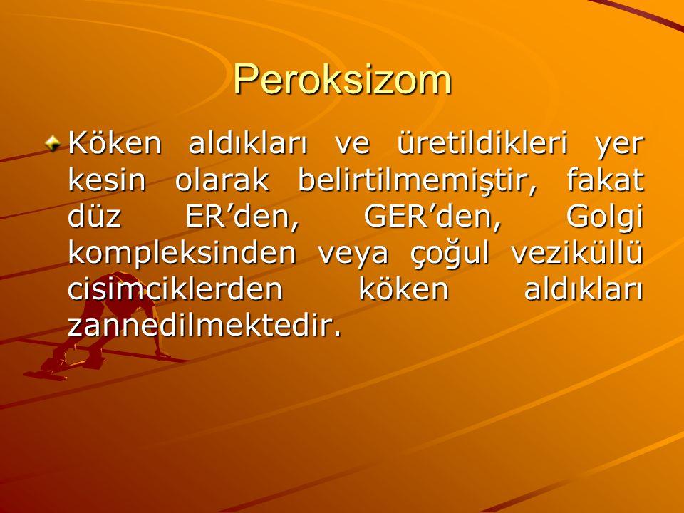 Peroksizom Köken aldıkları ve üretildikleri yer kesin olarak belirtilmemiştir, fakat düz ER'den, GER'den, Golgi kompleksinden veya çoğul veziküllü cis
