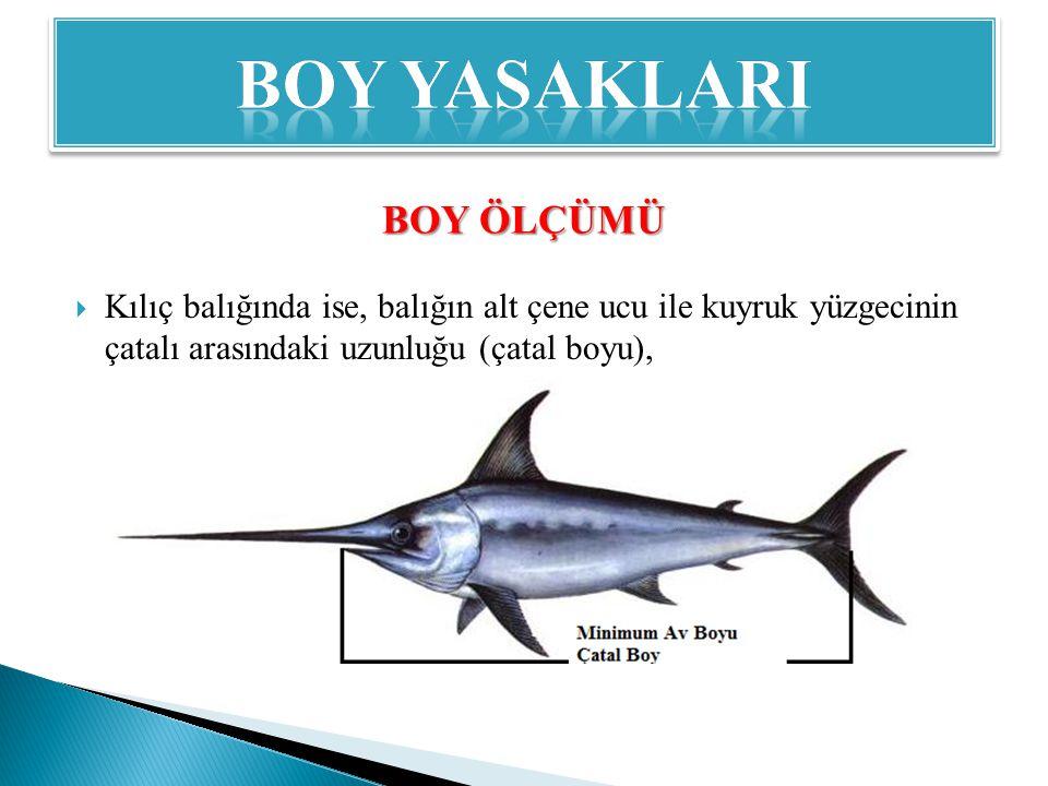  Kılıç balığında ise, balığın alt çene ucu ile kuyruk yüzgecinin çatalı arasındaki uzunluğu (çatal boyu), BOY ÖLÇÜMÜ