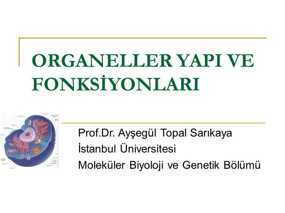 ORGANELLER YAPI VE FONKSİYONLARI Prof.Dr.