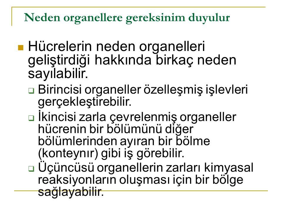 1) Özelleşmiş Yapılar olarak Organeller Bu tip organele ilk örnek sil dir.