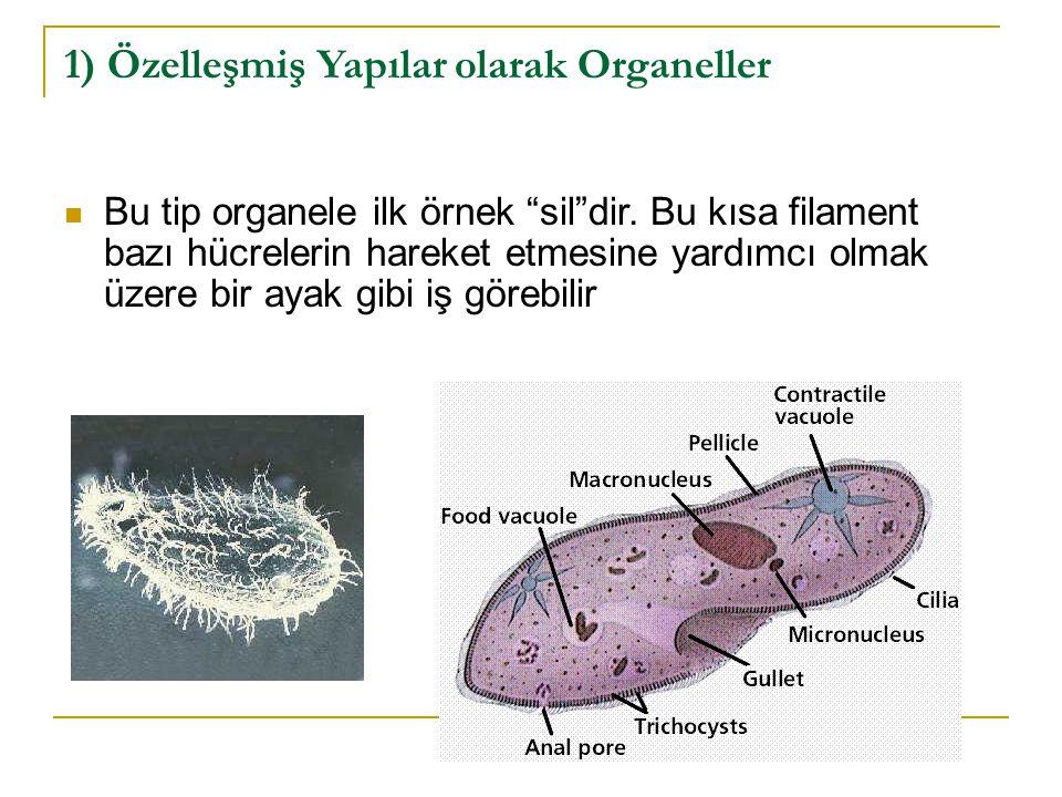 2) Konteynır (bölme) olarak Organeller İnsanoğlu tarafından geliştirilen hiçbir şey bir canlı hücre kadar karmaşık değildir.
