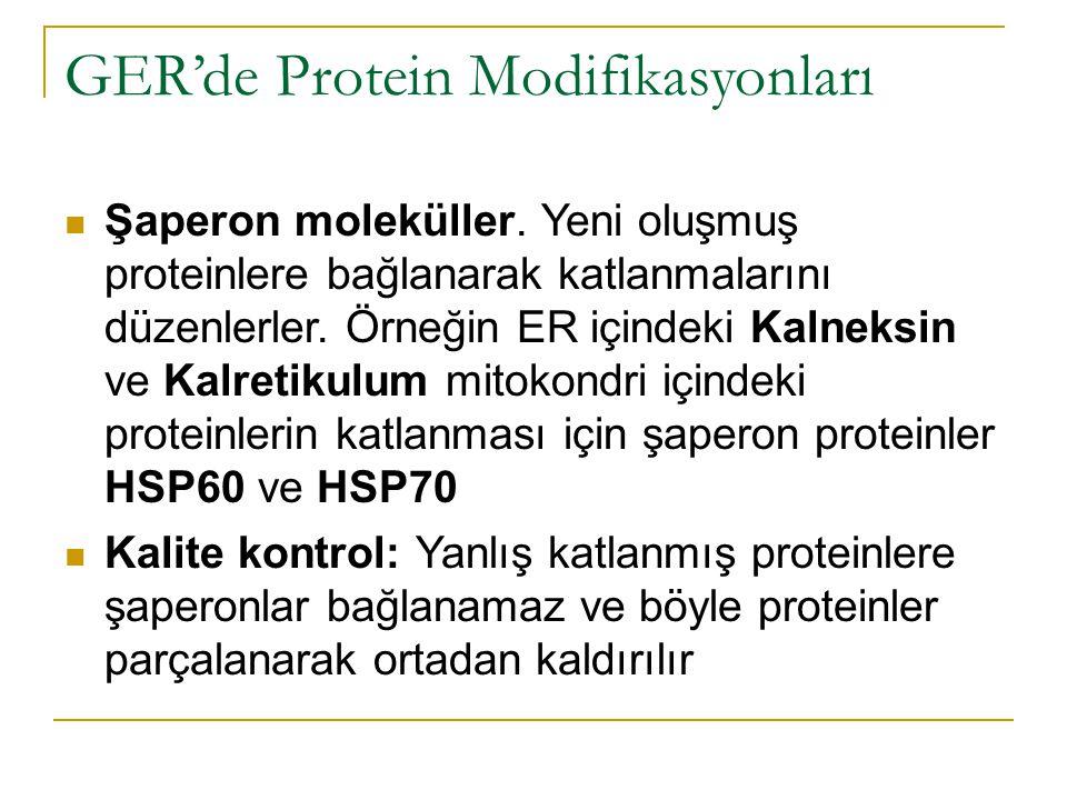 GER'de Protein Modifikasyonları Şaperon moleküller.