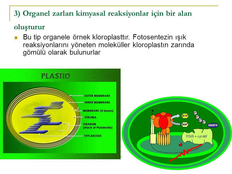 3) Organel zarları kimyasal reaksiyonlar için bir alan oluşturur Bu tip organele örnek kloroplasttır.
