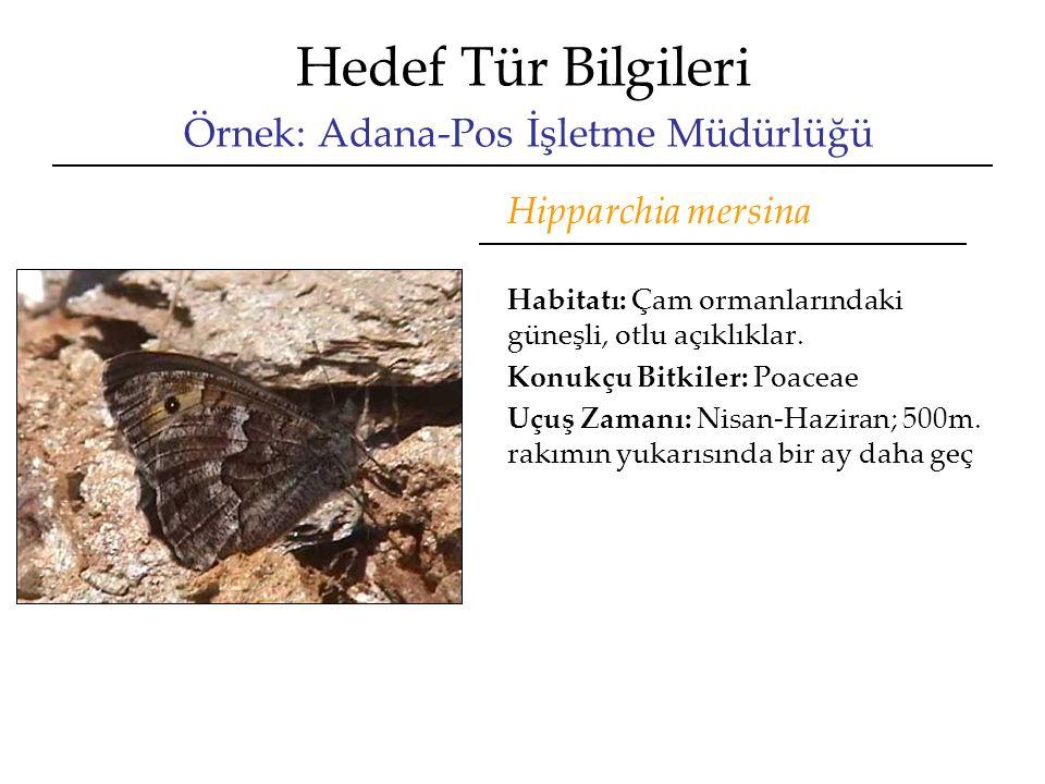 Hedef Tür Bilgileri Örnek: Adana-Pos İşletme Müdürlüğü Hipparchia mersina Habitatı: Çam ormanlarındaki güneşli, otlu açıklıklar. Konukçu Bitkiler: Poa