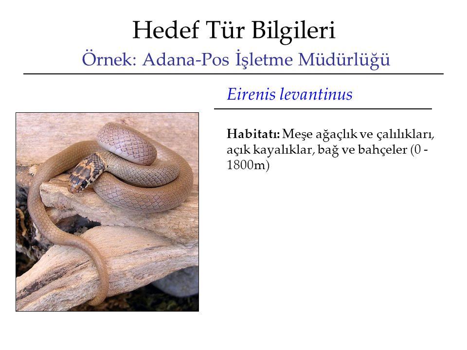 Hedef Tür Bilgileri Örnek: Adana-Pos İşletme Müdürlüğü Eirenis levantinus Habitatı: Meşe ağaçlık ve çalılıkları, açık kayalıklar, bağ ve bahçeler (0 - 1800m)