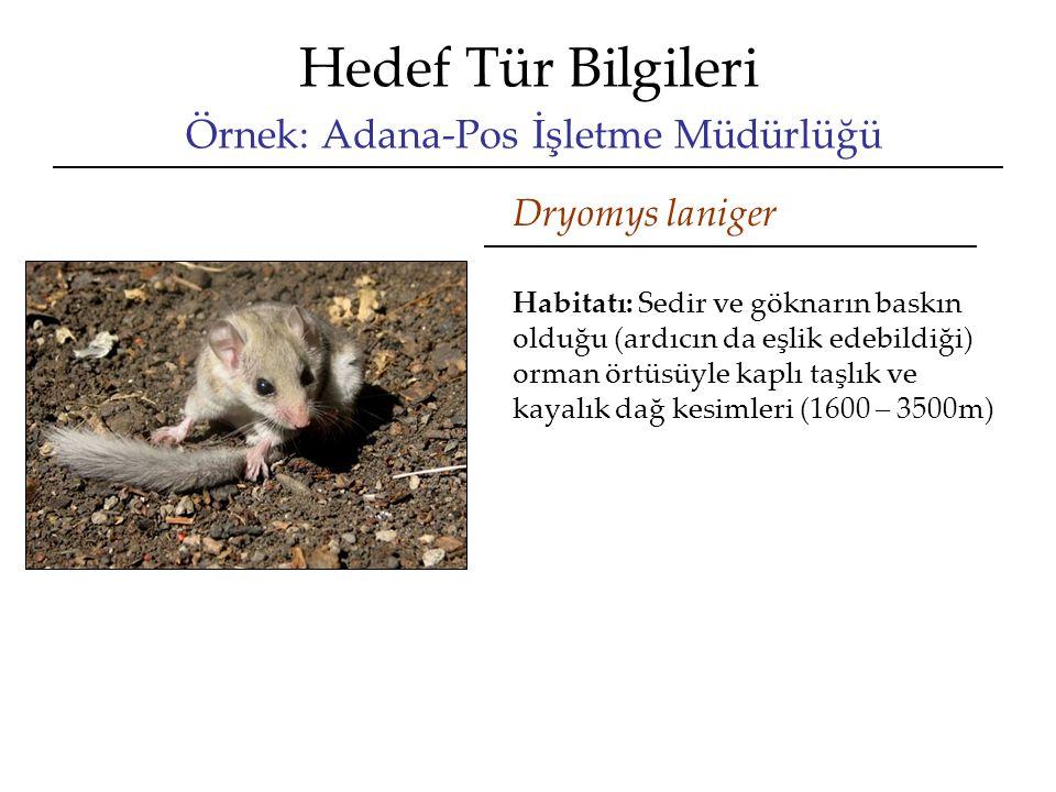 Hedef Tür Bilgileri Örnek: Adana-Pos İşletme Müdürlüğü Dryomys laniger Habitatı: Sedir ve göknarın baskın olduğu (ardıcın da eşlik edebildiği) orman ö
