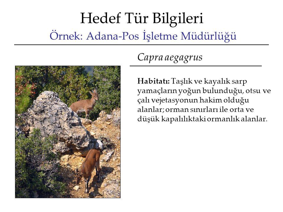 Hedef Tür Bilgileri Örnek: Adana-Pos İşletme Müdürlüğü Capra aegagrus Habitatı: Taşlık ve kayalık sarp yamaçların yoğun bulunduğu, otsu ve çalı vejetasyonun hakim olduğu alanlar; orman sınırları ile orta ve düşük kapalılıktaki ormanlık alanlar.
