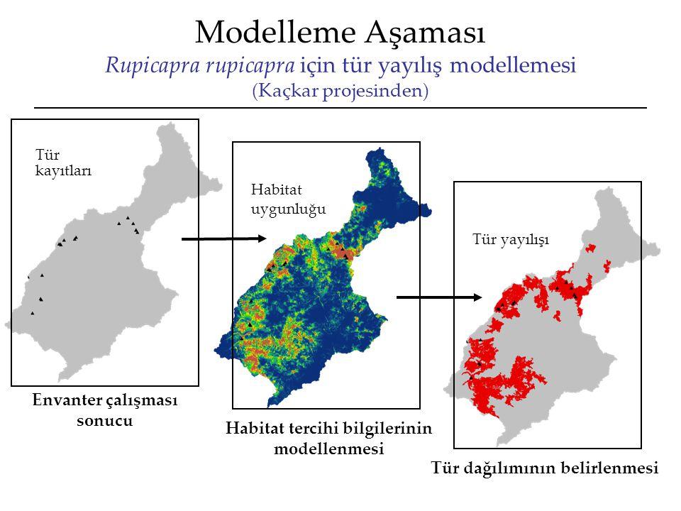 Modelleme Aşaması Rupicapra rupicapra için tür yayılış modellemesi (Kaçkar projesinden) Tür yayılışı Habitat uygunluğu Tür kayıtları Envanter çalışması sonucu Habitat tercihi bilgilerinin modellenmesi Tür dağılımının belirlenmesi