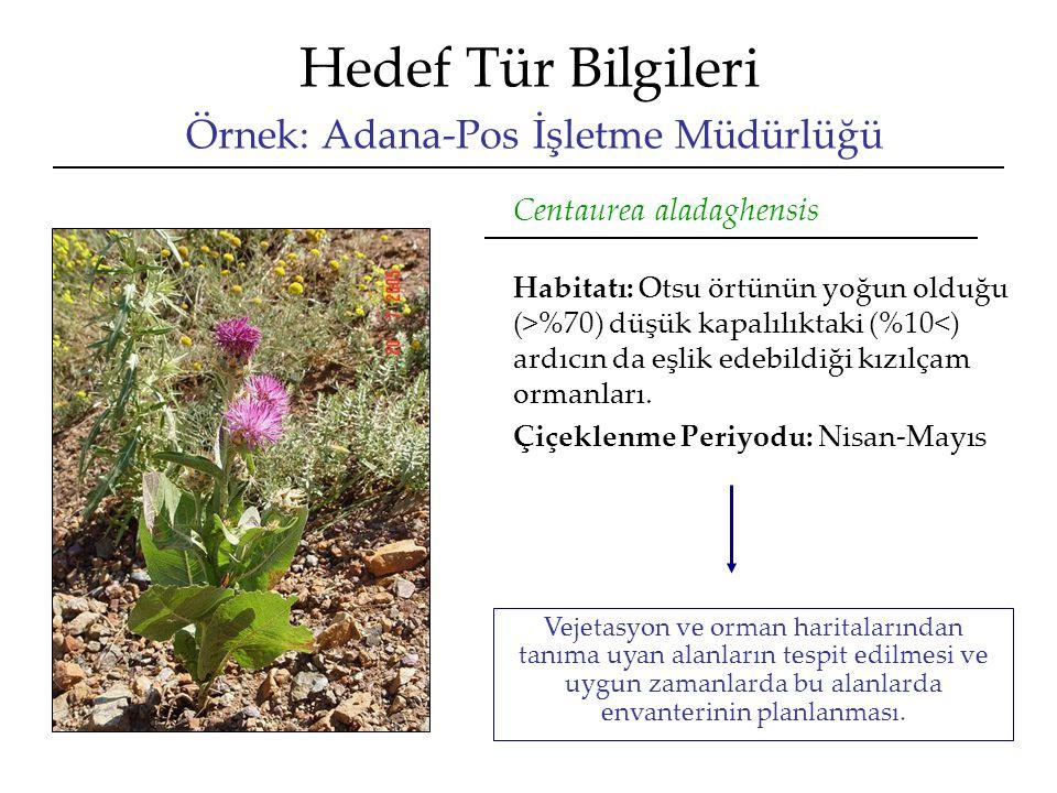 Hedef Tür Bilgileri Örnek: Adana-Pos İşletme Müdürlüğü Centaurea aladaghensis Habitatı: Otsu örtünün yoğun olduğu (>%70) düşük kapalılıktaki (%10<) ardıcın da eşlik edebildiği kızılçam ormanları.