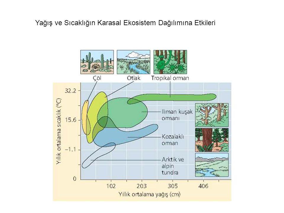 Abiyotik faktörler organizmaların yayılışını etkiler Sıcaklık Su Güneş Işığı Rüzgar Kayalar ve Toprak Sıcaklık, su, ışık ve rüzgar iklimin ana elemanl
