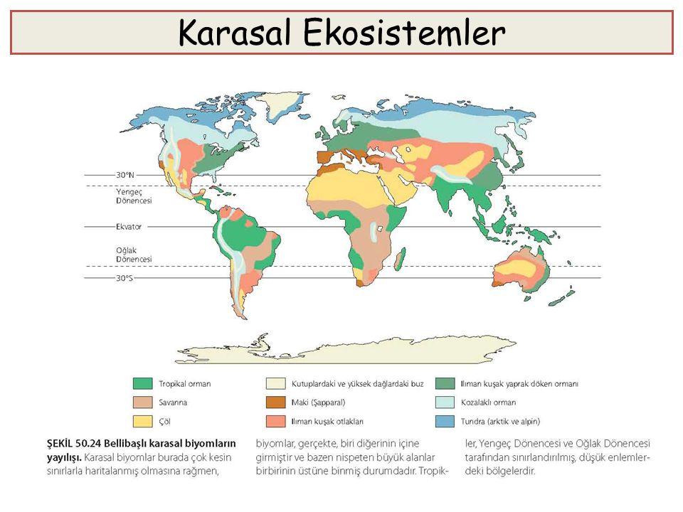 Karasal Ekosistemler Karasal ekosistemlerin coğrafik yayılışı, büyük ölçüde, iklimdeki bölgesel değişiklikler üzerine dayanır. Karasal ekosistemler, s
