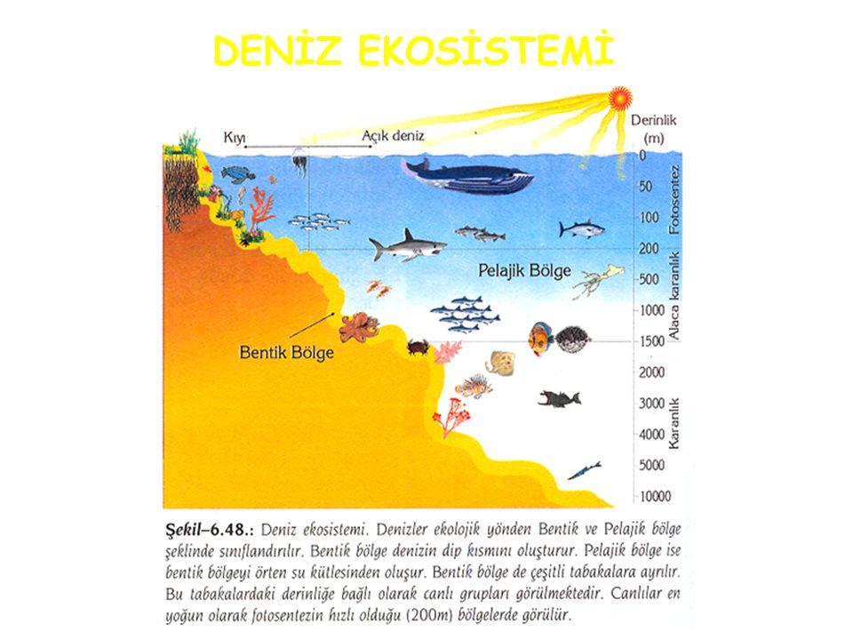 Büyük Su Ekosistemleri Sucul Ekosistemlerde yaşayan canlıları etkileyen faktörler: ışık şiddeti, çözünmüş oksijen ve karbondioksit miktarı ile organik