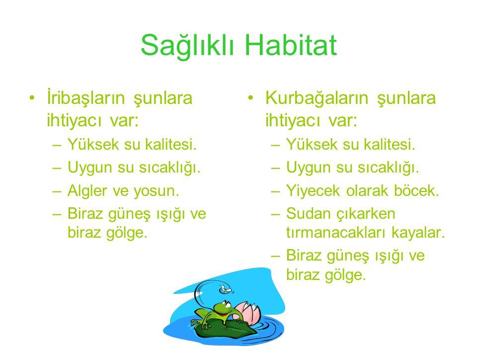 Sağlıklı Habitat İribaşların şunlara ihtiyacı var: –Yüksek su kalitesi.