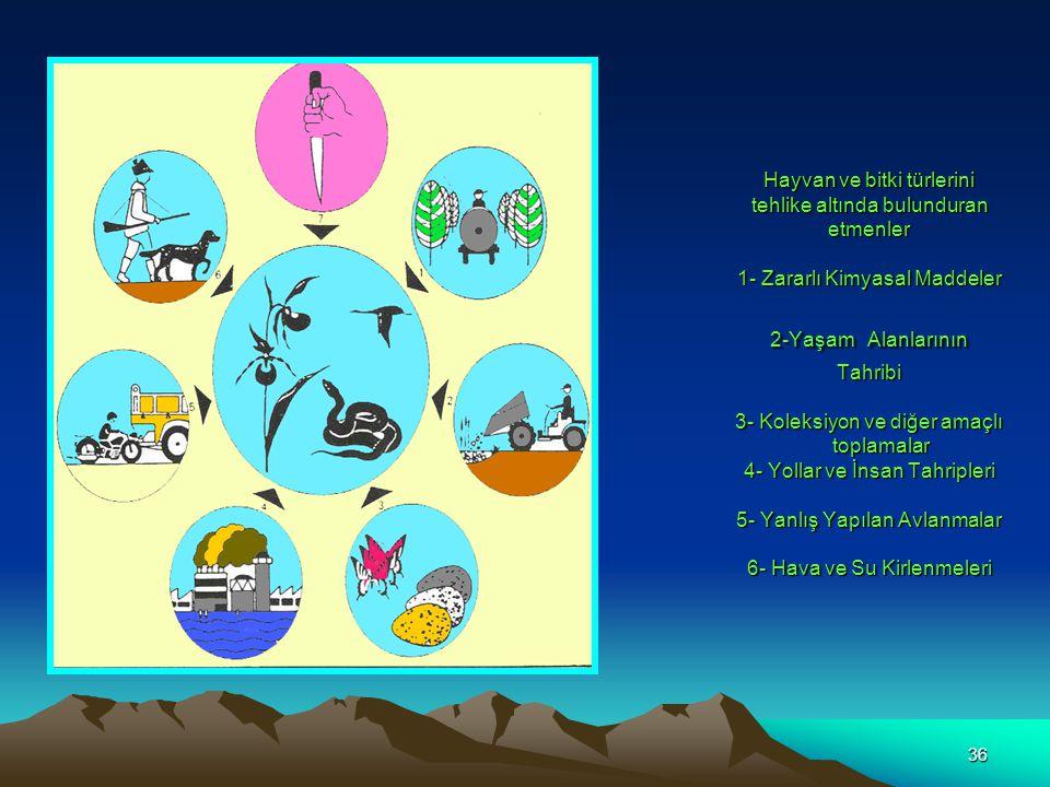 36 Hayvan ve bitki türlerini tehlike altında bulunduran etmenler 1- Zararlı Kimyasal Maddeler 2-Yaşam Alanlarının Tahribi 3- Koleksiyon ve diğer amaçl