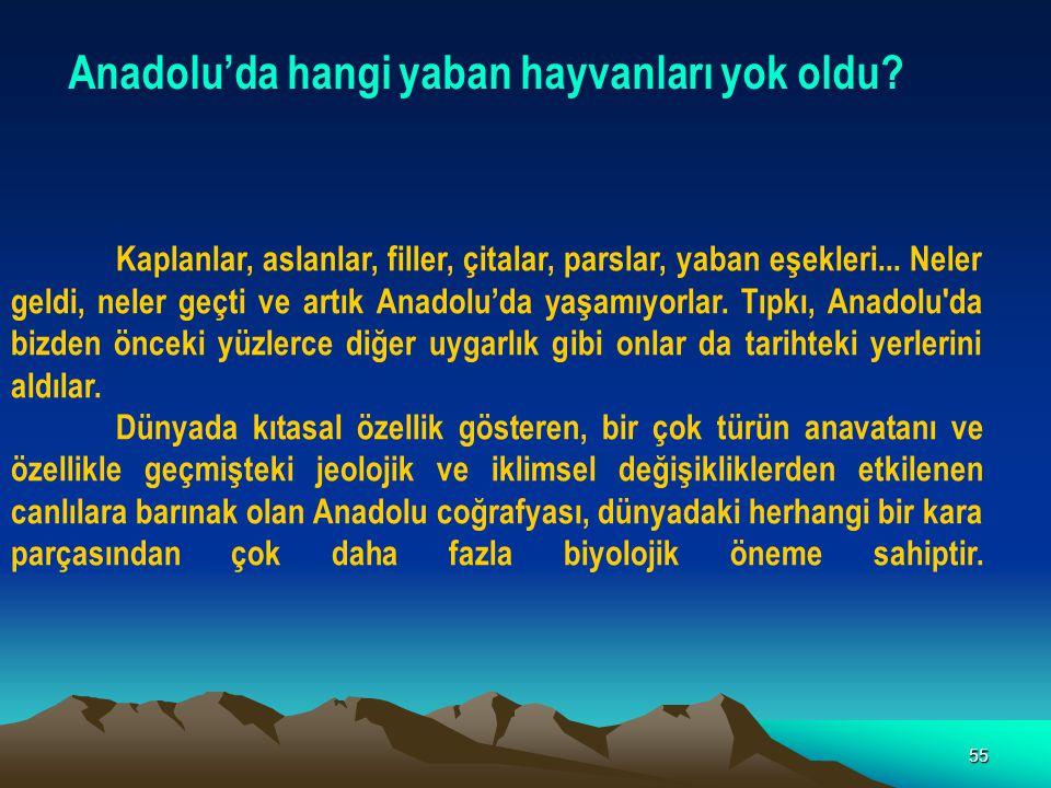 55 Anadolu'da hangi yaban hayvanları yok oldu? Kaplanlar, aslanlar, filler, çitalar, parslar, yaban eşekleri... Neler geldi, neler geçti ve artık Anad