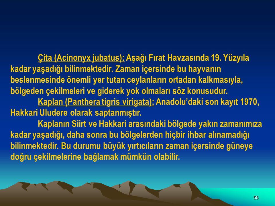 58 Çita (Acinonyx jubatus): Aşağı Fırat Havzasında 19. Yüzyıla kadar yaşadığı bilinmektedir. Zaman içersinde bu hayvanın beslenmesinde önemli yer tuta
