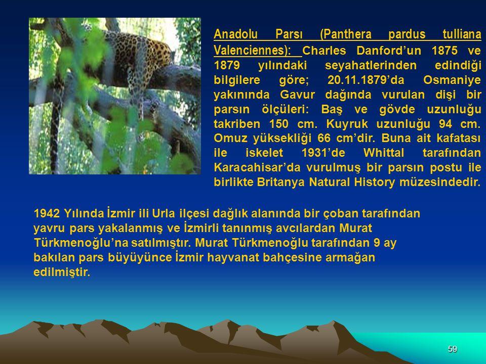 59 Anadolu Parsı (Panthera pardus tulliana Valenciennes): Charles Danford'un 1875 ve 1879 yılındaki seyahatlerinden edindiği bilgilere göre; 20.11.187