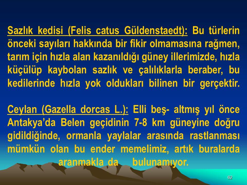 62 Sazlık kedisi (Felis catus Güldenstaedt): Bu türlerin önceki sayıları hakkında bir fikir olmamasına rağmen, tarım için hızla alan kazanıldığı güney
