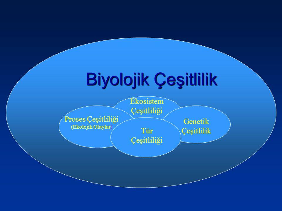 Biyolojik Çeşitlilik Ekosistem Çeşitliliği Tür Çeşitliliği Genetik Çeşitlilik Proses Çeşitliliği (Ekolojik Olaylar) Tür Çeşitliliği