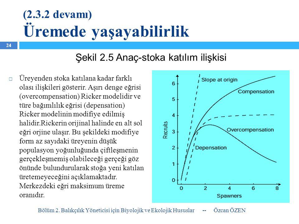 (2.3.2 devamı) Üremede yaşayabilirlik  Üreyenden stoka katılana kadar farklı olası ilişkileri gösterir. Aşırı denge eğrisi (overcompensation) Ricker