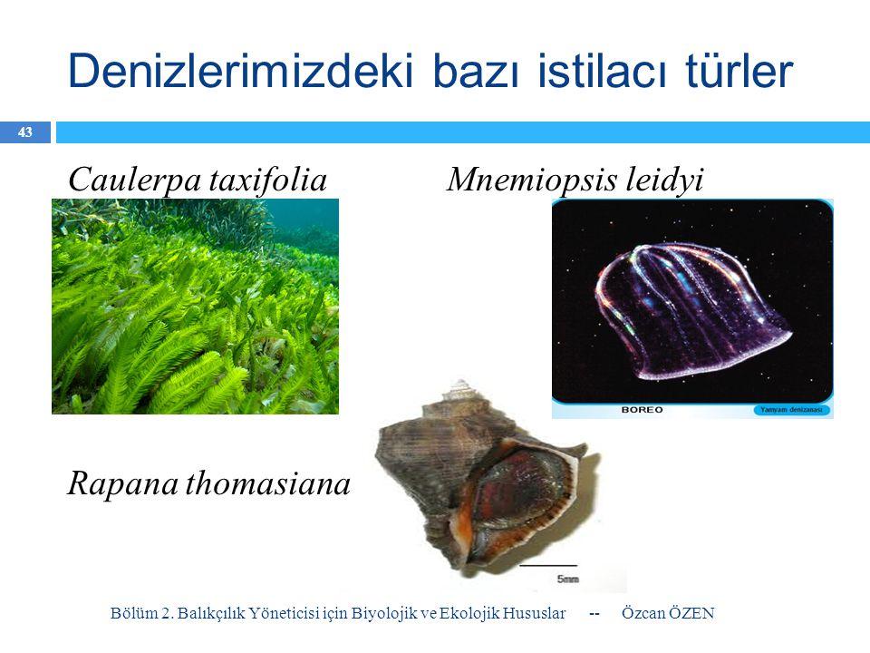 Denizlerimizdeki bazı istilacı türler Caulerpa taxifolia Mnemiopsis leidyi Rapana thomasiana -- Özcan ÖZENBölüm 2. Balıkçılık Yöneticisi için Biyoloji