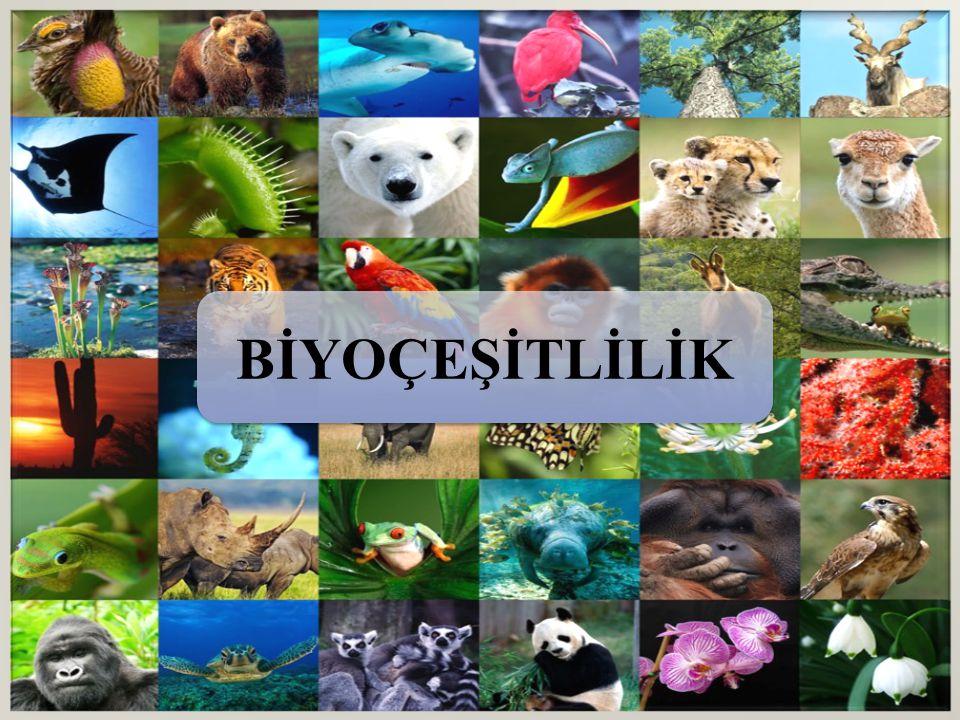 Dünyamız büyük ve karmaşık.Bilim sürekli yeni türler keşfediyor.