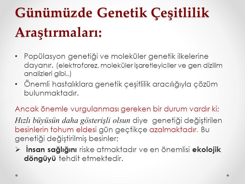 Günümüzde Genetik Çeşitlilik A: Günümüzde Genetik Çeşitlilik Araştırmaları: Popülasyon genetiği ve moleküler genetik ilkelerine dayanır.