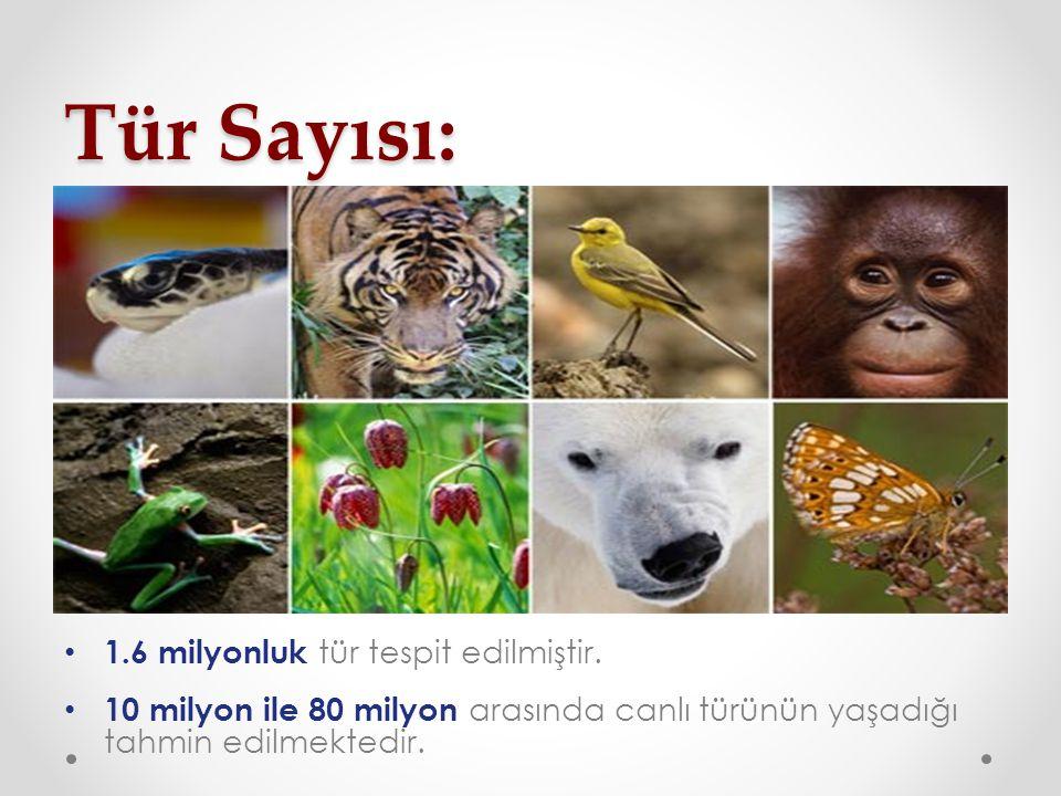 Tür Sayısı: 1.6 milyonluk tür tespit edilmiştir.