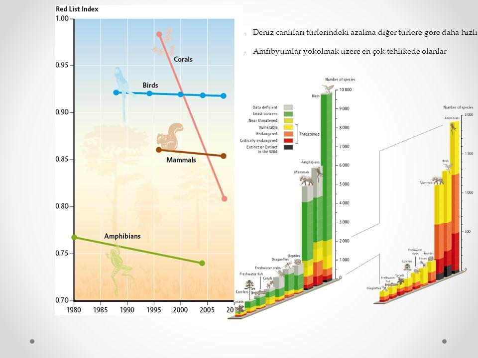 -Deniz canlıları türlerindeki azalma diğer türlere göre daha hızlı.