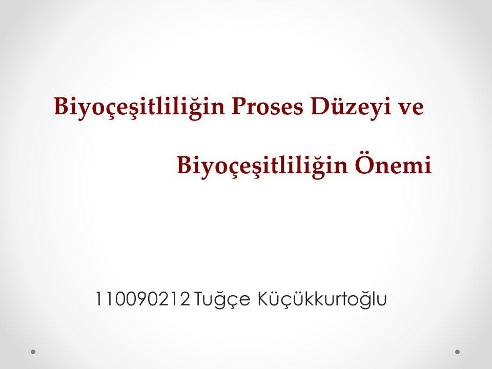 110090212 Tuğçe Küçükkurtoğlu Biyoçeşitliliğin Proses Düzeyi ve Biyoçeşitliliğin Önemi
