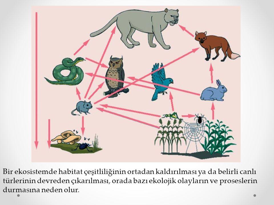 Bir ekosistemde habitat çeşitliliğinin ortadan kaldırılması ya da belirli canlı türlerinin devreden çıkarılması, orada bazı ekolojik olayların ve proseslerin durmasına neden olur.