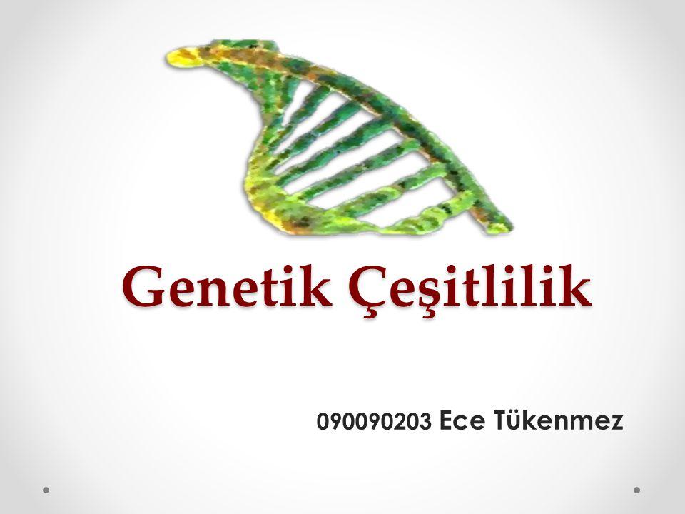 Genetik Çeşitlilik 090090203 Ece Tükenmez