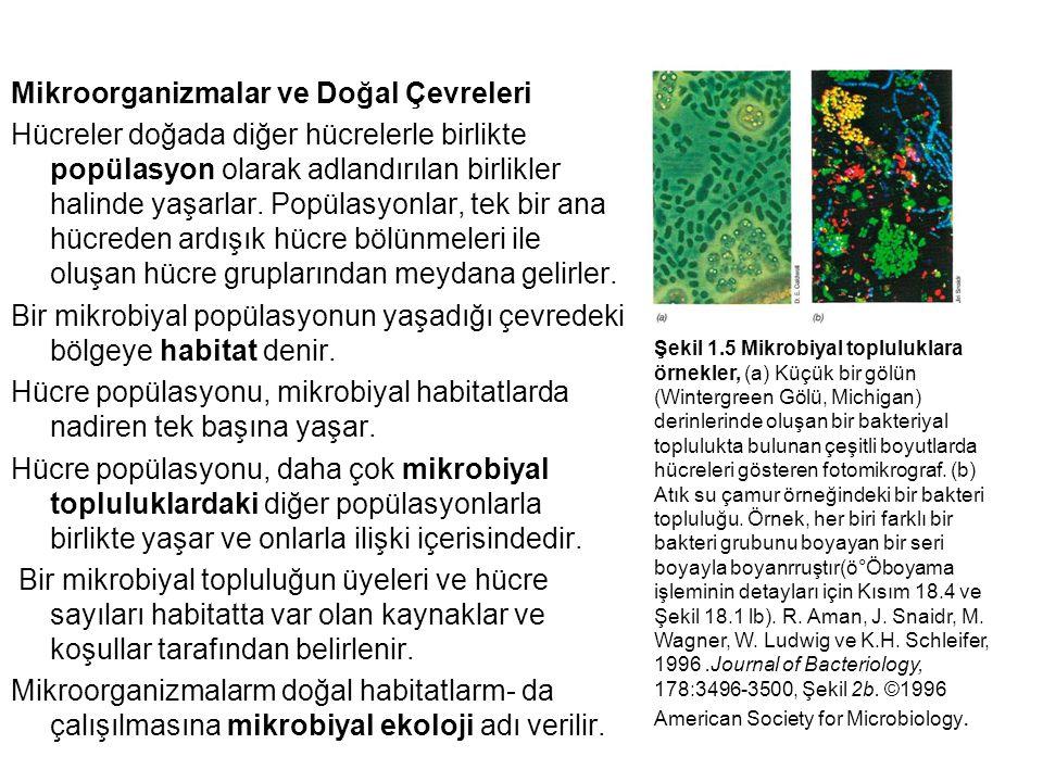 Mikroorganizmalar ve Doğal Çevreleri Hücreler doğada diğer hücrelerle birlikte popülasyon olarak adlandırılan birlikler halinde yaşarlar. Popülasyonla