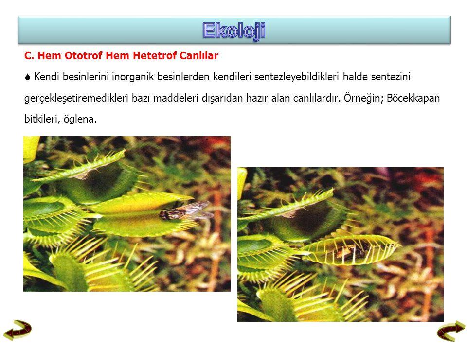 C. Hem Ototrof Hem Hetetrof Canlılar  Kendi besinlerini inorganik besinlerden kendileri sentezleyebildikleri halde sentezini gerçekleşetiremedikleri